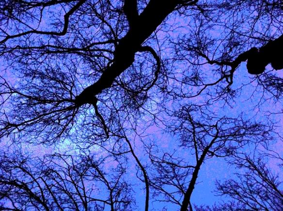 breath tree-2